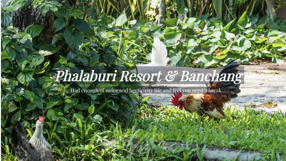 web-phalaburi